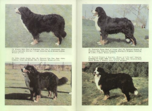9780951220603: Bernese Mountain Dog