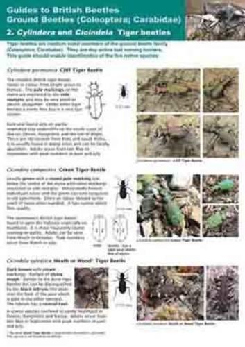 9780954025663: Tiger-Beetles Cylindera and Cicindela: Ground Beetles (Coleoptera; Carabidae)