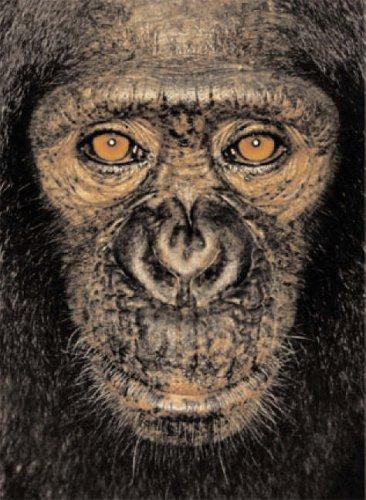 9780954689438: James Mollison: James & Other Apes