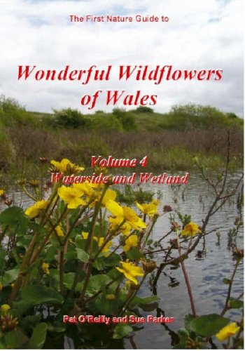 9780954955465: Wild Orchids in Wales