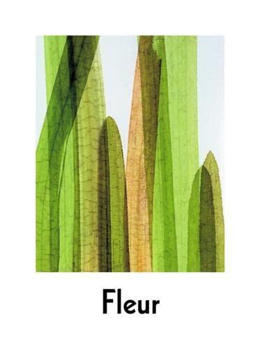 9780955006104: Fleur: Plant Portraits