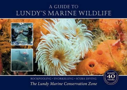 9780956805416: A Guide to Lundy's Marine Wildlife: Rockpooling - Snorkelling - Scuba Diving. The Lundy Marine Conservation Zone
