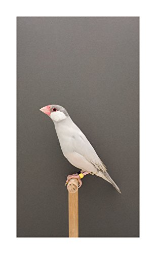 9780957434103: Luke Stephenson: An Incomplete Dictionary of Show Birds