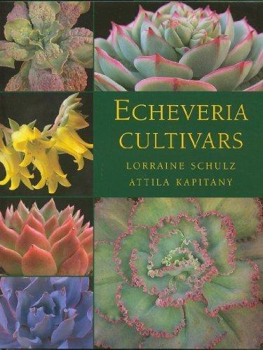 9780958516778: Echeveria Cultivars