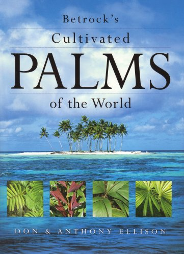 9780962976155: Betrock's Cultivated Palms of the World