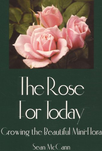 The Rose for Today Growing the Beautiful Mini-flora: Sean McCann