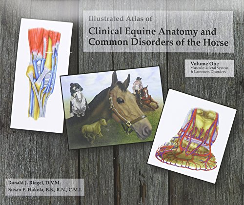 9780965446105: Illustrated Atlas of Clinical Equine Anatomy and Common Disorders of the Horse (Vol 1)