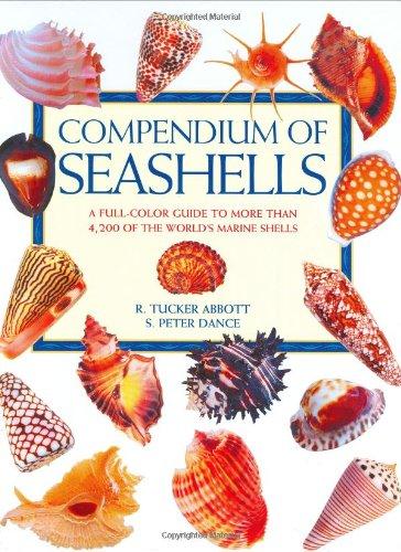 9780966172003: Compendium of Seashells