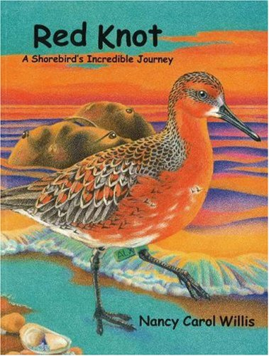 Red Knot: A Shorebird's Incredible Journey: Willis, Nancy Carol