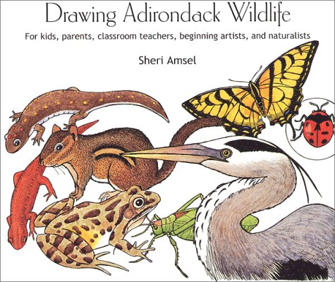 9780971306905: Drawing Adirondack Wildlife