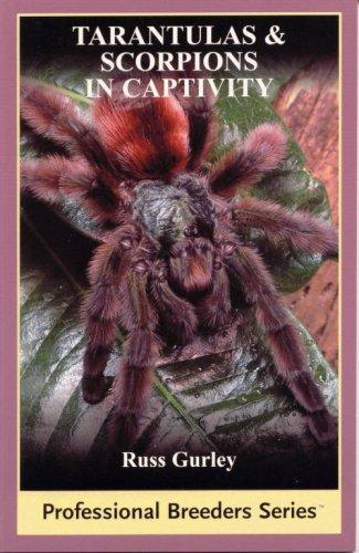 9780971319790: Tarantulas And Scorpions in Captivity (Professional Breeders)