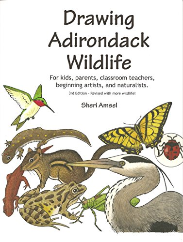 9780974132068: Drawing Adirondack Wildlife