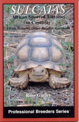 9780976733423: Sulcatas: African Spurred Tortoises in Captivity (Professional Breeders Series)