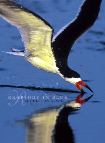 Rhapsody in Blue (A Celebration of North American Waterbirds)