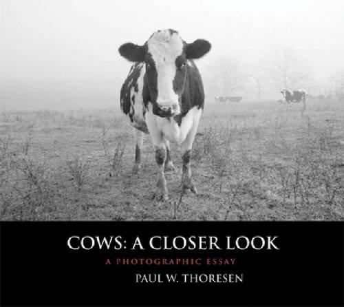 9780981562094: Cows: A Closer Look: A Photographic Essay