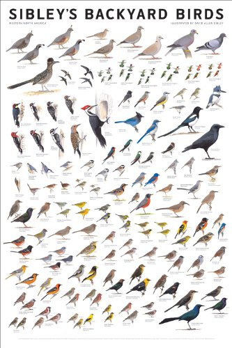 Sibley's Backyard Birds: Western North America (0982510217) by David Allen Sibley