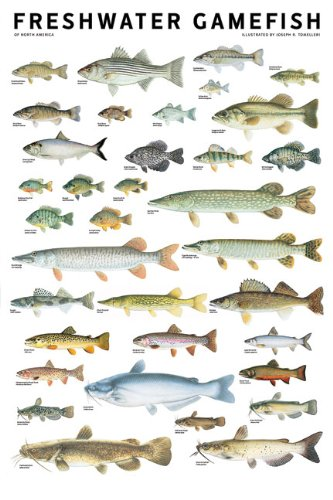Freshwater Gamefish of North America Poster: Joseph R. Tomelleri