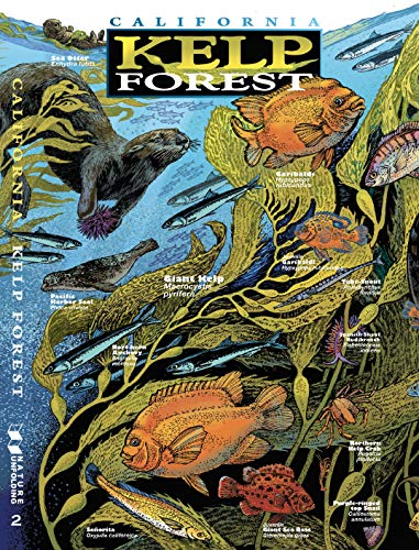 9780982835616: California Kelp Forest (Nature Unfolding Science Guide #2)