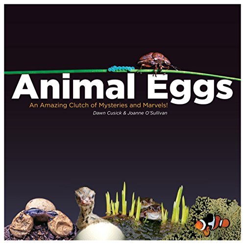 Animal Eggs: An Amazing Clutch of Mysteries and Marvels: Cusick, Dawn; O'Sullivan, Joanne