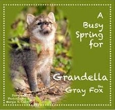 A Busy Spring for Grandella the Gray Fox: Margie K. Carroll