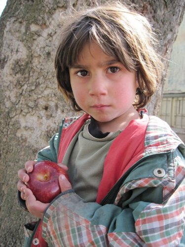 RECLAIMING THE APPLE Poems from Afghanistan: Amundsen, Adrienne