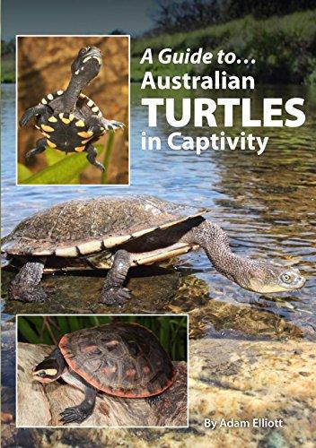 A Guide to Australian Turtles in Captivity (Paperback): Adam Elliott