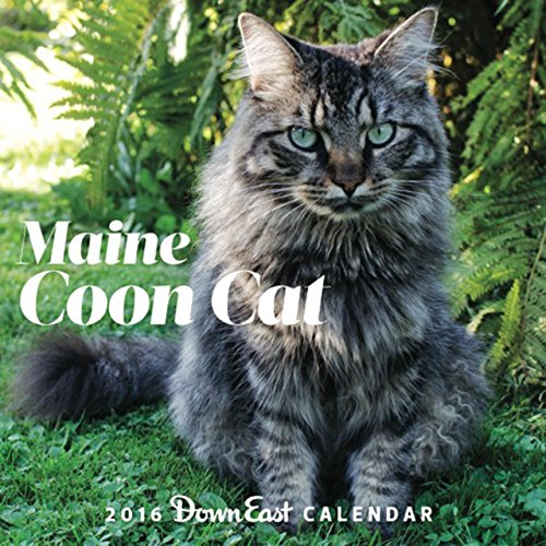 9780991452224: 2016 Maine Coon Cat Down East Wall Calendar