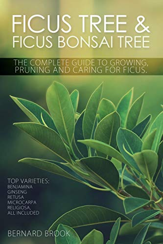 Ficus Tree and Ficus Bonsai Tree. The Complete Guide to Growing, Pruning and Caring for Ficus. Top ...