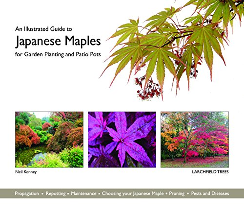 9780993213304: An Illustrated Guide to Japanese Maples for Garden Planting and Patio Pots