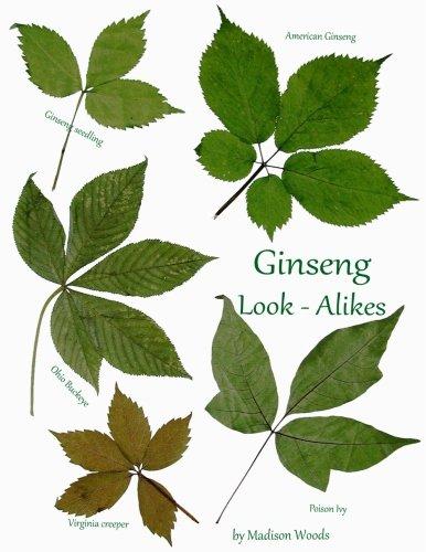 Ginseng Look-Alikes (Paperback)