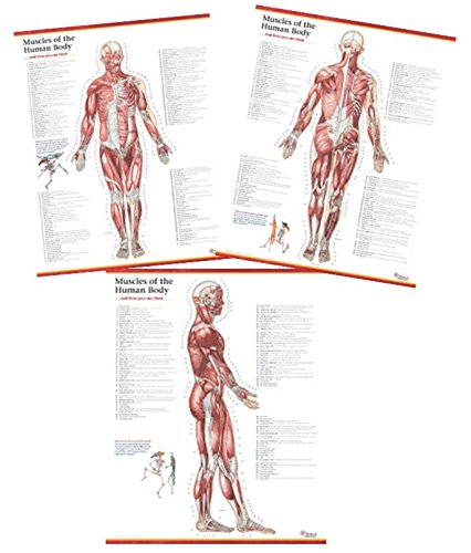 9780996835978: Trail Guide to the Body\'s Muscles of the Human Body ...