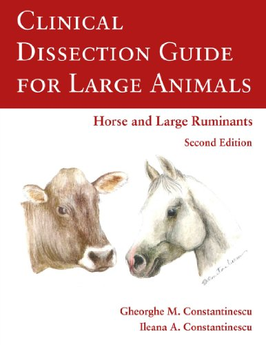 9781105072840: Clinical Dissection Guide For Large Animals