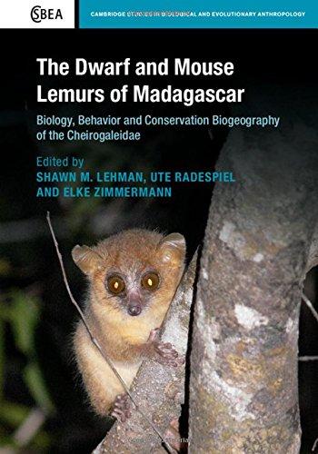 9781107075597: The Dwarf and Mouse Lemurs of Madagascar: Biology, Behavior and Conservation Biogeography of the Cheirogaleidae (Cambridge Studies in Biological and Evolutionary Anthropology)