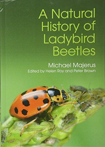A Natural History Of Ladybird Beetles: Majerus, Michael