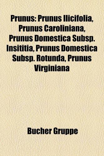 9781159277284: Prunus: Prunus ilicifolia, Prunus caroliniana, Prunus domestica subsp. insititia, Prunus domestica subsp. rotunda, Prunus virginiana