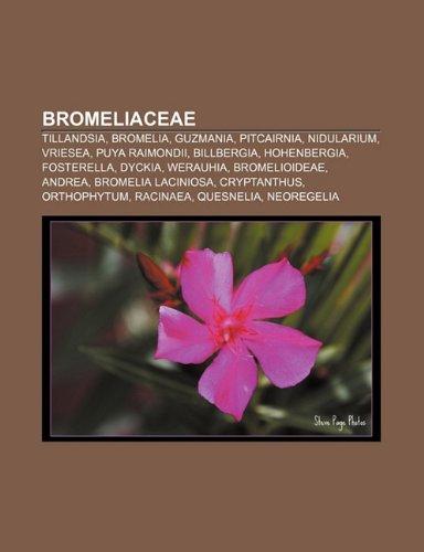 9781231402634: Bromeliaceae: Tillandsia, Bromelia, Guzmania, Pitcairnia, Nidularium, Vriesea, Puya Raimondii, Billbergia, Hohenbergia, Fosterella,