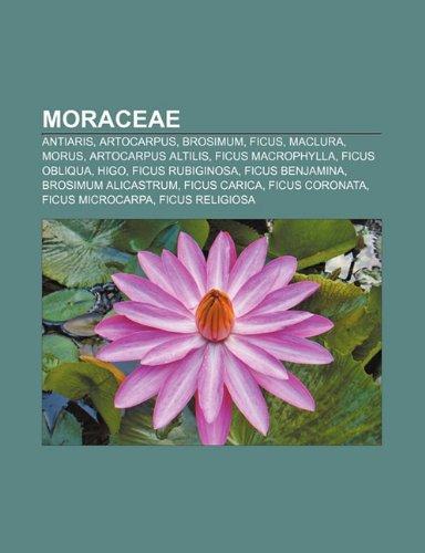 9781231416594: Moraceae: Antiaris, Artocarpus, Brosimum, Ficus, Maclura, Morus, Artocarpus Altilis, Ficus Macrophylla, Ficus Obliqua, Higo, Fic