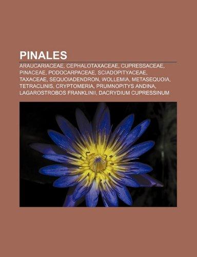 9781231431290: Pinales: Araucariaceae, Cephalotaxaceae, Cupressaceae, Pinaceae, Podocarpaceae, Sciadopityaceae, Taxaceae, Sequoiadendron, Wollemia