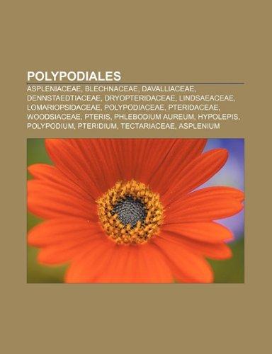 9781231595541: Polypodiales: Aspleniaceae, Blechnaceae, Davalliaceae, Dennstaedtiaceae, Dryopteridaceae, Lindsaeaceae, Lomariopsidaceae, Polypodiac