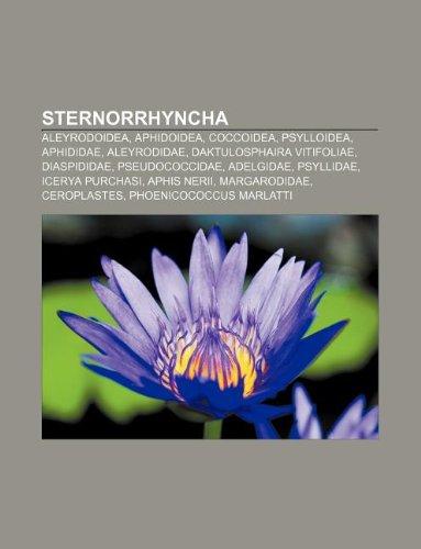 9781232197034: Sternorrhyncha: Aleyrodoidea, Aphidoidea, Coccoidea, Psylloidea, Aphididae, Aleyrodidae, Daktulosphaira vitifoliae, Diaspididae, Pseudococcidae (Italian Edition)