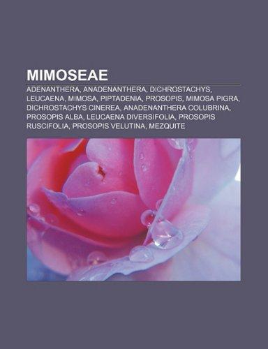 9781232492924: Mimoseae: Adenanthera, Anadenanthera, Dichrostachys, Leucaena, Mimosa, Piptadenia, Prosopis, Mimosa Pigra, Dichrostachys Cinerea