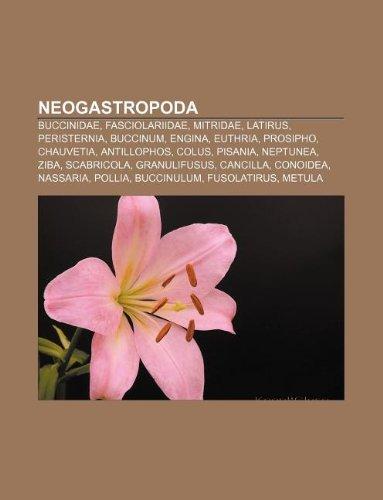 9781233898275: Neogastropoda: Buccinidae, Fasciolariidae, Mitridae, Latirus, Peristernia, Buccinum, Engina, Euthria, Prosipho, Chauvetia, Antillopho