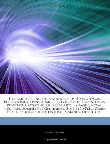 9781243101860: Articles on Loricariidae, Including: Ancistrus, Hypostomus Plecostomus, Hypostomus, Plecostomus, Hypostomus Punctatus, Otocinclus, Zebra Oto, Panaque,