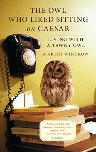 9781250069344: The Owl Who Liked Sitting on Caesar: Living with a Tawny Owl
