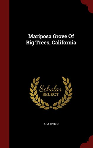 9781296845827: Mariposa Grove Of Big Trees, California