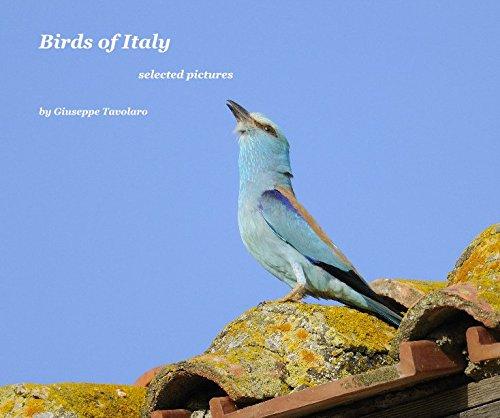 9781320677547: Birds of Italy