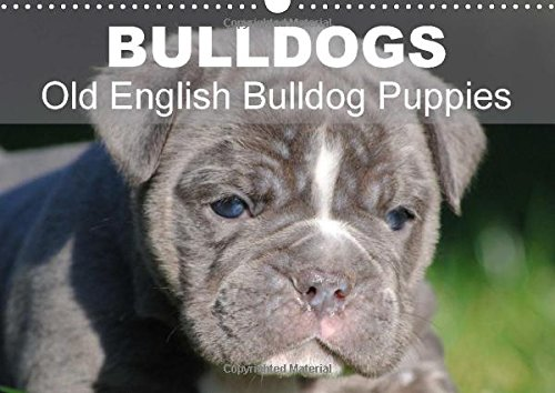 9781325030354: Bulldogs - Old English Bulldog Puppies: Beautiful Bulldog Puppies in the Sun