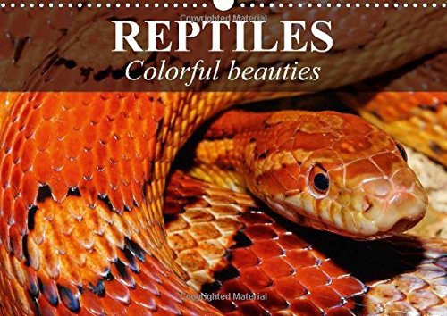 9781325053261: Reptiles Colorful Beauties: Cold-Blooded Beauties
