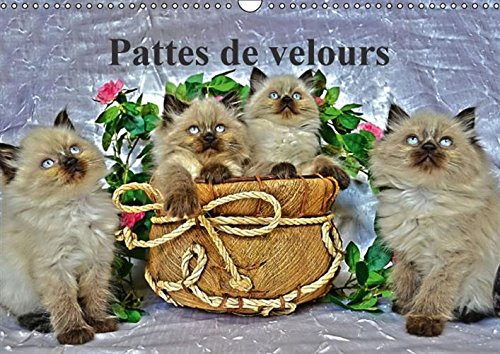 9781325054268: Pattes de velours 2016: Seance photos de chatons (Calvendo Animaux) (French Edition)