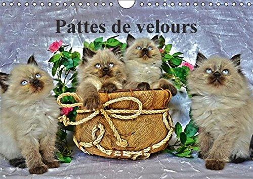 Pattes De Velours: Seance Photos De Chatons (Calvendo Animaux) (French Edition): Saume, Sylvia